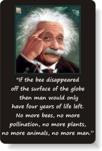 What einstein said about the disappearances of the bees