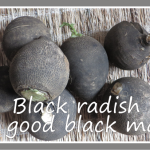 black radishes for cough