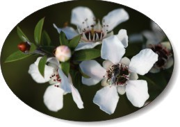manuka honey treats digestive problems