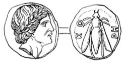 ancient coin with the head of Aristaeus and bee