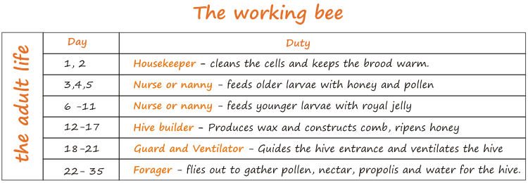 jobs of a working bee