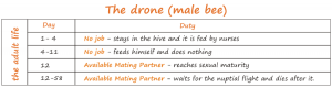 what does a drone all day?