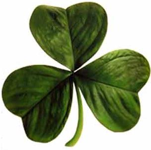 shamrock the symbol of Ireland