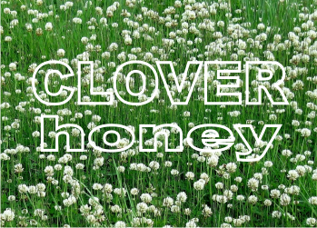 buy clover honey