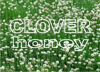 buy clover honey