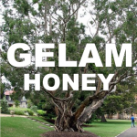 lelaleuca honey aka cajeput honey or gelam honey benefits for health
