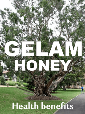 health benefits of gelam honey aka cajeput honey
