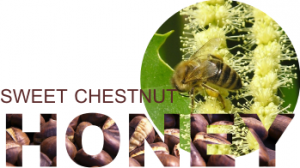chestnut honey with bee in flowers