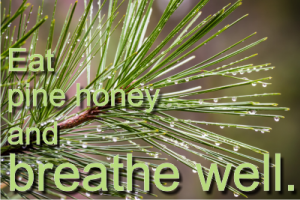 pine honey is a natural treatment for respiratory conditions