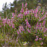 heather honey is a powerful antioxidant