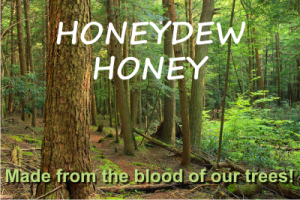 honeydew honey the best antioxidant honey