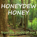 what is honeydew honey