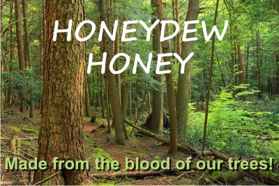 honeydew honey the best antioxidant honey