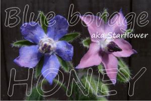 blue borage honey health benefits