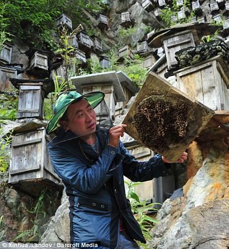 Chinese beekeeper