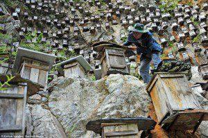 climbing among hives