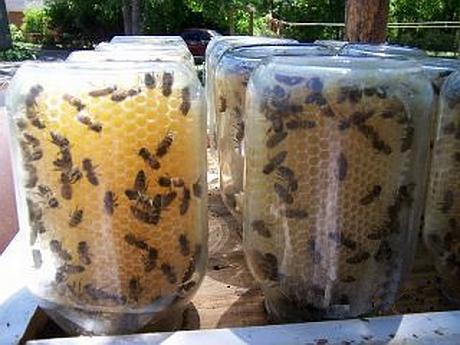 keeping bees in a jar