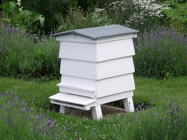 common hive