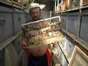 pure wild organic honey