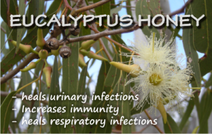 health benefits of eucalyptus honey