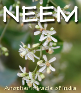 neem honey health benefits