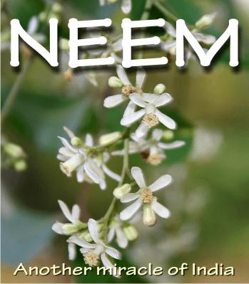 neem honey health benefits