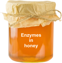 are enzymes in honey important?