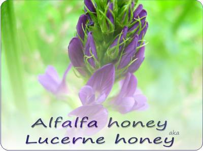 buy alfalfa honey
