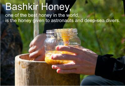 bashkir honey2