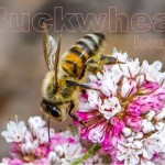 the most powerful antioxidant honey