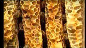 bashkir honey in combs