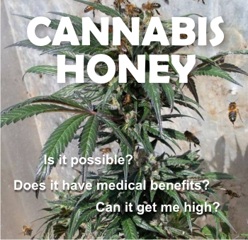 Image result for honey bees hemp