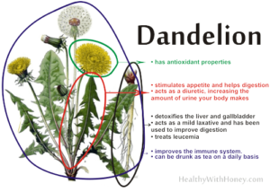 what are the benefits of dandelion