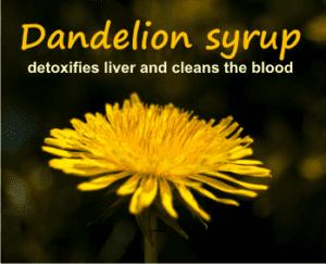 dandelion syrup detoxifies liver