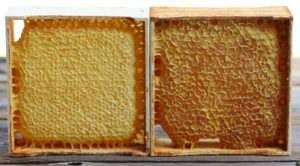 dry and wet honey cappings