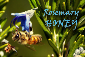 what is rosemary honey good for