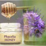 phacelia honey health benefits