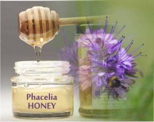 phacelia honey health benefits