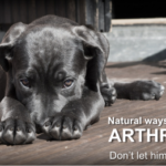 treat a dog's arthritis