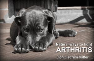 treat a dog's arthritis