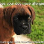 local raw honey treats your dog's allergies