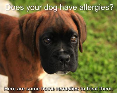 local raw honey treats your dog's allergies