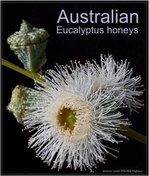 different types of Australian honeys
