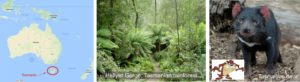 rainforest and tasmanian devil