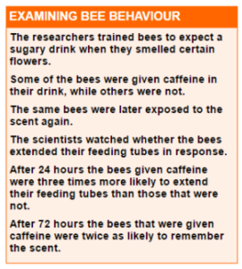 the effect of caffeine on bees