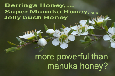 berringa honey aka super manuka honey has a higher antibacterial activity than manuka honey from New Zealand