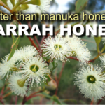Is jarrah honey better than manuka honey?