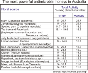 top most powerful antibacterial honeys