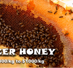 what is the best honey in the world