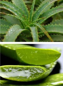 what is the best natural treatment for sinusitis - try aloe vera